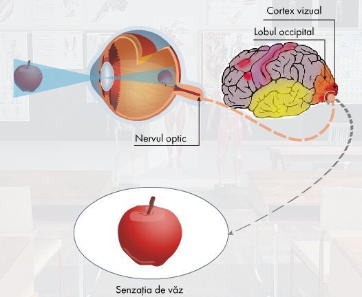 boli ale creierului și ale vederii